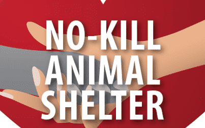 Image result for no kill shelters
