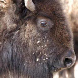 Buffalo-free-speech